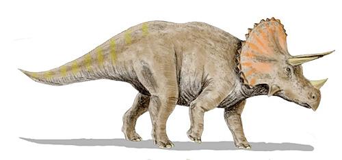 トリケラトプス写真